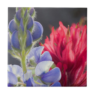 Silvery Lupine, Lavender Paintbrush Tile