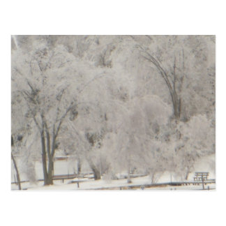 Silvery Trees Postcard