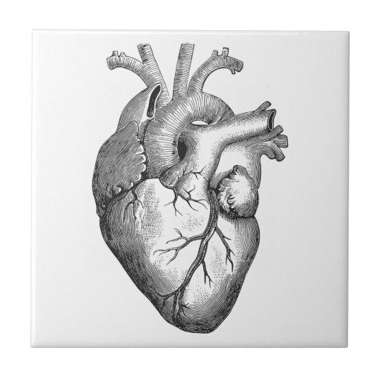 Simple Black White Anatomy Heart Illustration Small Square Tile
