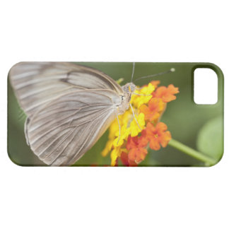 Simple butterfly on yellow and red flowers iPhone 5 cover