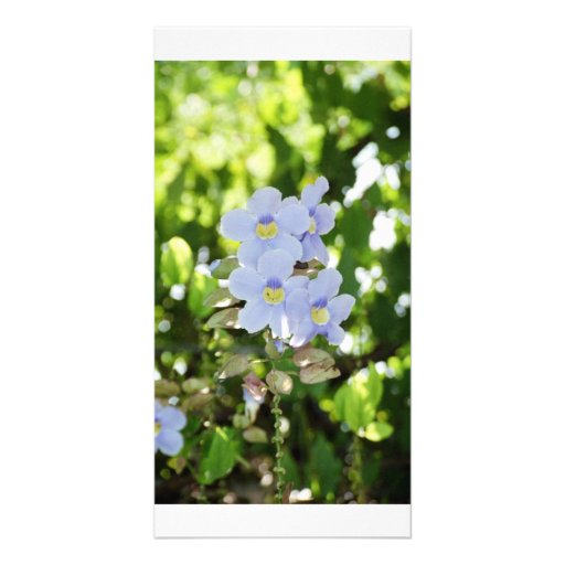 Simplicity Picture Card