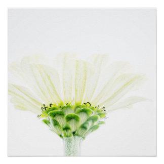 Simplistic Zinnia Flower