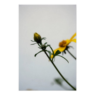 Simply... Floral Photography - Minimalism Poster