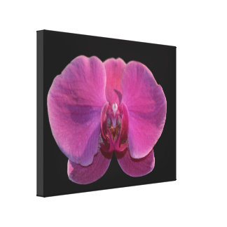 Simply Orchids Prints