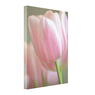 Simply Pink Tulip Gallery Wrap Canvas
