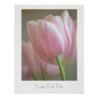 Simply Pink Tulip Poster