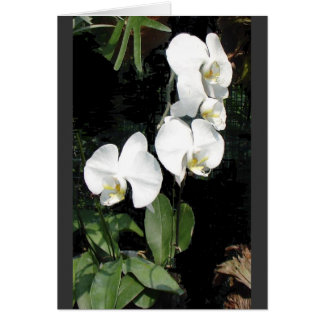 Singapore orchid 4 card