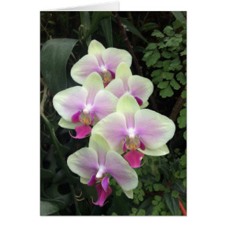 Singapore orchid photo card