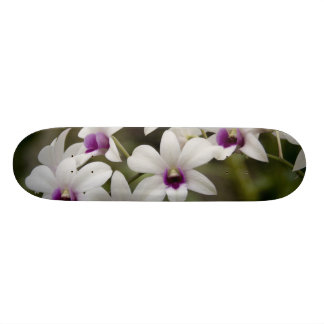 Singapore (Sanskrit for Lion City). National 2 Skateboard