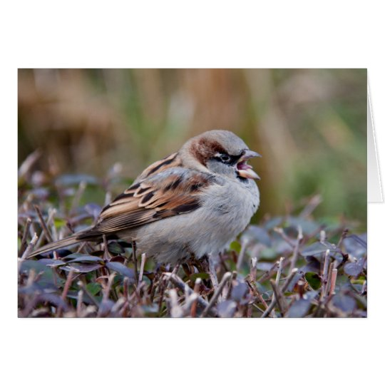 Singing bird card