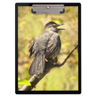 Singing Gray Catbird Clipboard