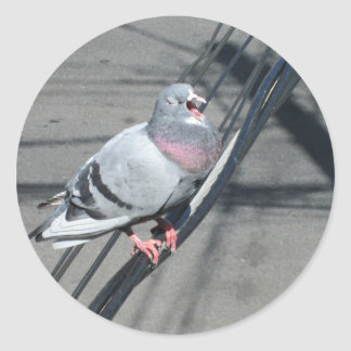 Singing Pigeon Outside Your Window Round Sticker