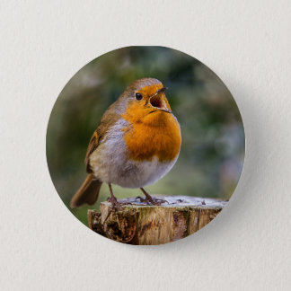 Singing robin on a badge