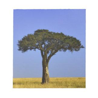 Single Acacia tree on grassy plains, Masai Mara, Notepad