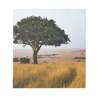 Single acacia tree on grassy plains, Masai Mara, Notepads