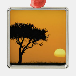 Single Acacia tree silhouetted at sunrise, Masai Silver-Colored Square Decoration