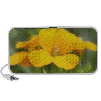 Single Bloom - Wallflower Travelling Speaker