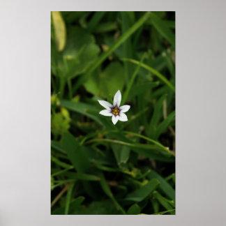 Single Bloom Wildflower Macro Photograph Poster