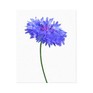 single blue cornflower canvas print
