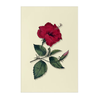 Single Botanical Style Dark Red Hibiscus Blossom Acrylic Wall Art