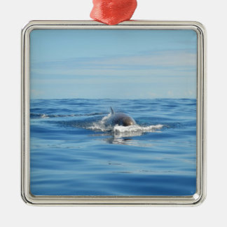 Single Bottlenose Whale Silver-Colored Square Decoration