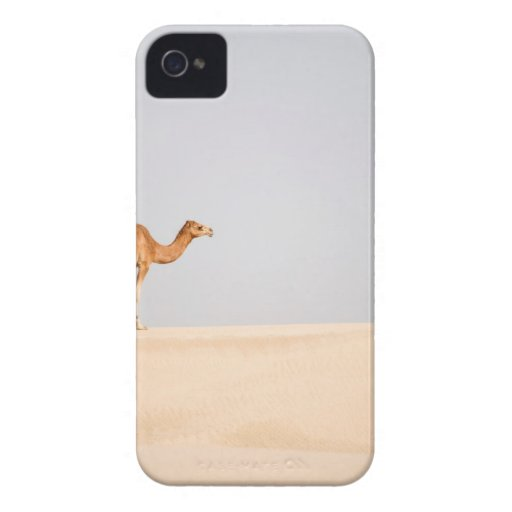 Single camel on Arabian sand dunes iPhone 4 Case-Mate Cases