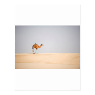 Single camel on Arabian sand dunes Postcard