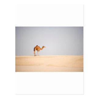 Single camel on Arabian sand dunes Postcard