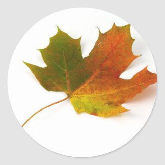 Single Coloured Maple Leaf On White Background Classic Round Sticker