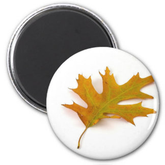 Single Coloured Northern Red Oak Leaf On White Bac 6 Cm Round Magnet