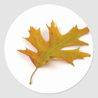 Single Coloured Northern Red Oak Leaf On White Bac Classic Round Sticker