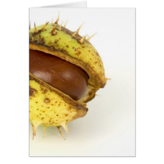 Single Conker On White Background Card