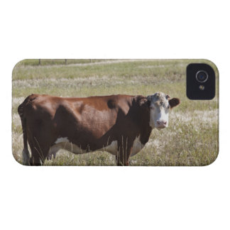 Single Cow In A Field Case-Mate iPhone 4 Cases