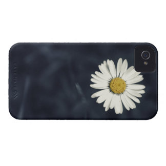 Single Daisy Flower iPhone 4 Cases