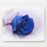 Single Dark Blue Rose, pale background