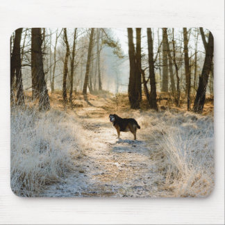 Single dog waiting ahead in path covered by frost mouse pad
