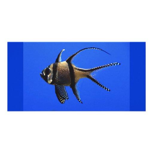 single-fish-in-aquarium picture card