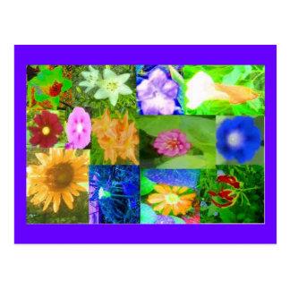 Single Flower Surprise from MaMaw's Garden Postcard