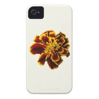 Single French Marigold Blackberry Bold Cover