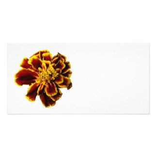 Single French Marigold Customized Photo Card