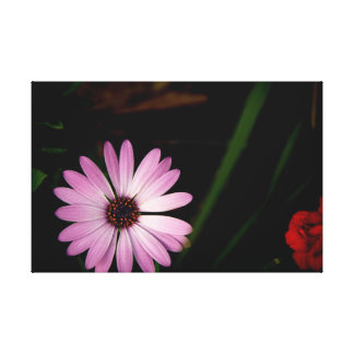 Single Lavender Flower on Canvas Stretched Canvas Prints