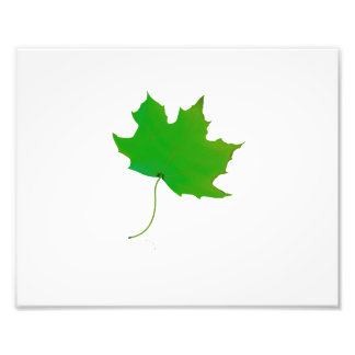 single maple green leaf plant image.png photo art
