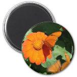 Single orange butterfly on a single orange flower magnet