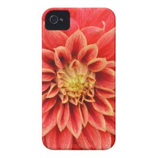 Single orange dahlia flower iPhone 4 Case-Mate cases