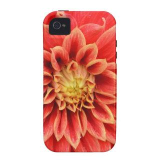 Single orange dahlia flower iPhone 4/4S covers