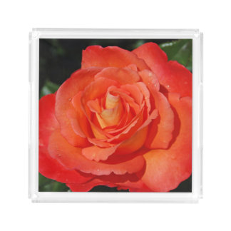 Single orange rose acrylic tray