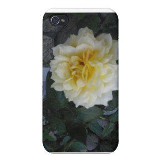 Single Pale Yellow Rose Case Cover For iPhone 4
