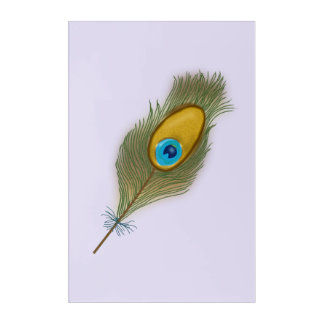 Single Peacock Feather Drawing Acrylic Wall Art