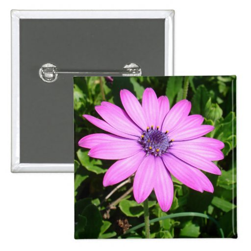 Single Pink African Daisy Against Green Foliage 15 Cm Square Badge