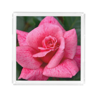 Single pink rose acrylic tray